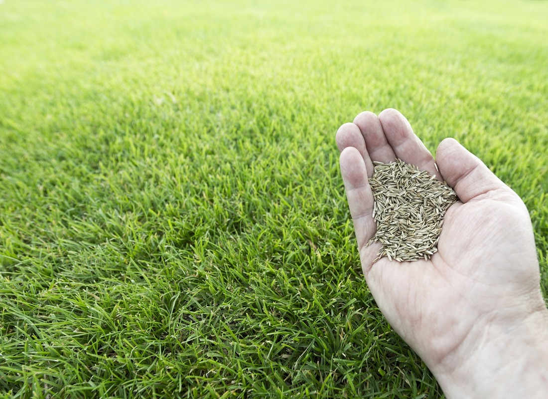 tall fescue grass seed for lawns in Iowa