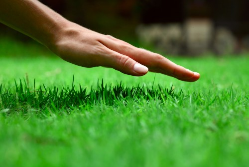 Best grass seed Iowa Lawns