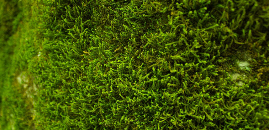 Get Moss Free Lawn