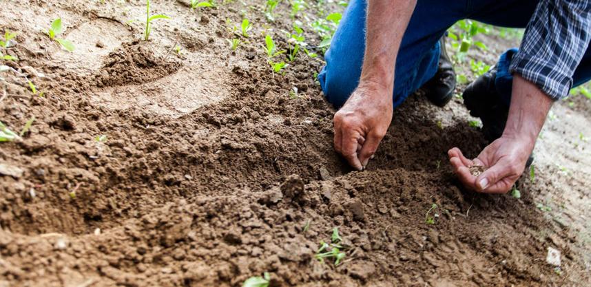 Lawn Soil Testing