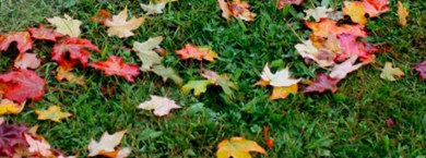 Fall Lawn Care Application