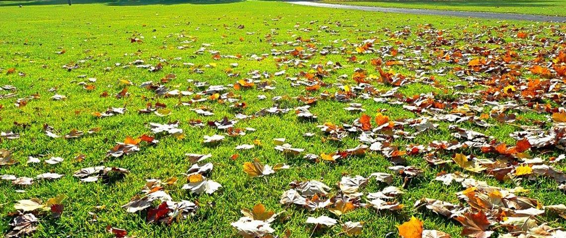 fall-lawn-care-aatb