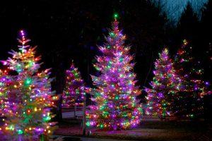 christmas tree lighting near me