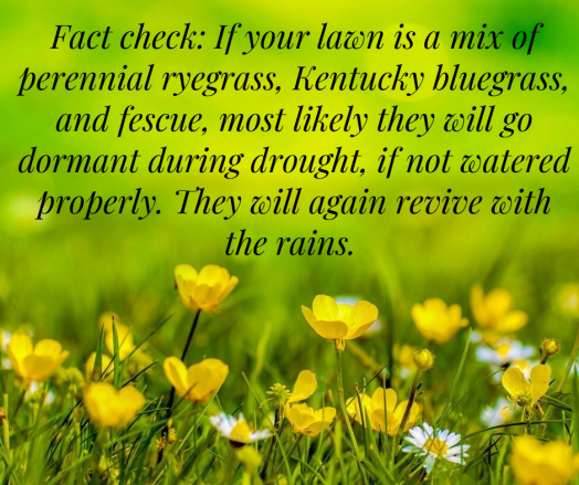 Kentucky-bluegrass-and-fescue