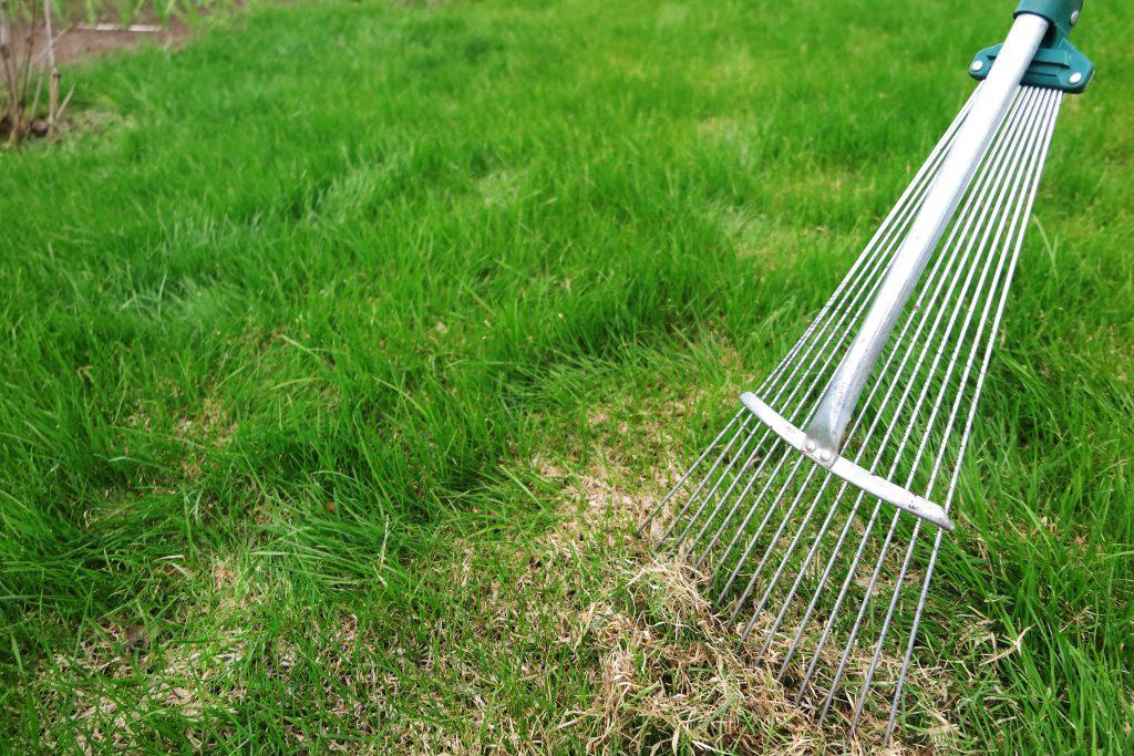 Dethatching lawn