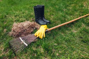 controlling thatch in lawns
