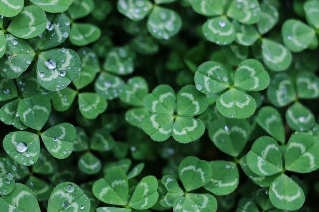 Controlling Clover