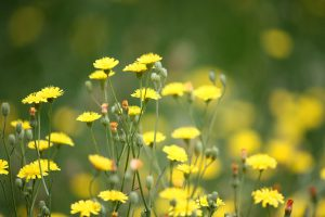 best summer weed control