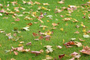 fall overseeding